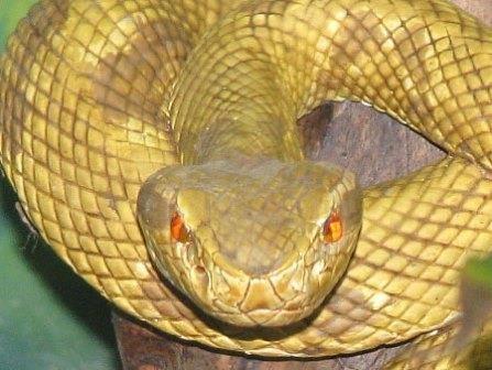 В бразилии ядовитые змеи выгнали со своего острова людей. видео