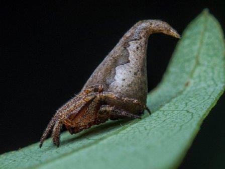 В честь распределяющей шляпы из книг о гарри поттере назван вид паука