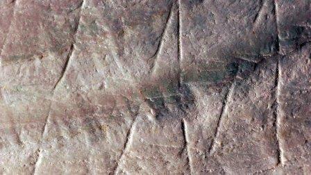 В индонезии обнаружен древнейший доисторический орнамент на раковине