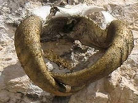 В ингушетии нашли позолоченные рога xv века