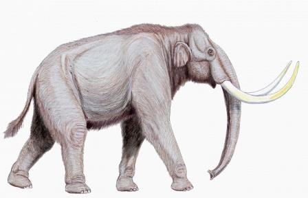 В якутии найден единственный на северо-востоке азии полный скелет предка мамонта