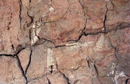 В якутии найдены самые древние в мире останки скелетных животных, их возраст — 550 млн лет