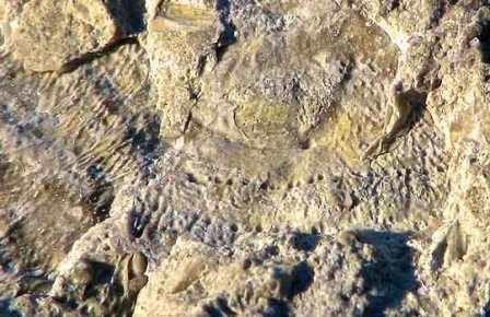 В якутии нашли самые первые скелеты
