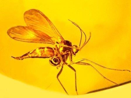 В янтаре найдены комар и пыльца орхидеи возрастом более 45 миллионов лет