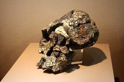 В кении найдены древнейшие каменные орудия