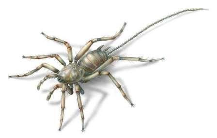 В мьянме в янтаре нашли странного хвостатого паука из мелового периода