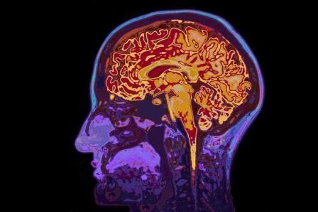 В мозге человека наконец обнаружили систему очистки