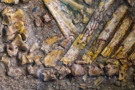 В сша обнаружены останки доисторических гепардов, лошадей и бизонов