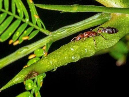 Виды-симбионты ускоренно эволюционируют ради сохранения партнерства