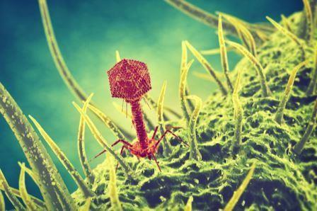 Вирусы двигают эволюцию