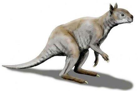 Выделена днк гигантских древних кенгуру