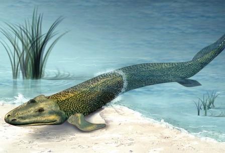 Выход животных на сушу объяснили влиянием сильных приливов