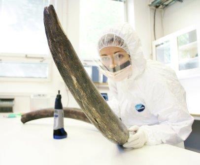 Вымирание угрожало мамонтам как минимум два раза