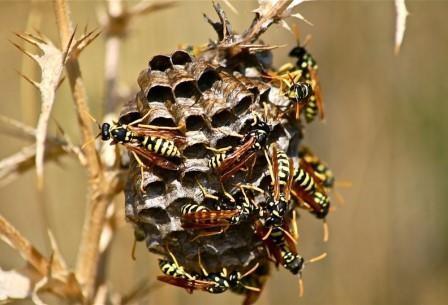 Высокая социализация плохо сказывается на мозге насекомых