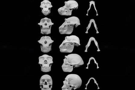 Жестокость сформировала форму наших черепов